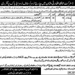 District Health Authority Multan 2021 Jobs For Charge Nurses